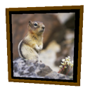 Frame Squirrel by Emmanuel Puybaret